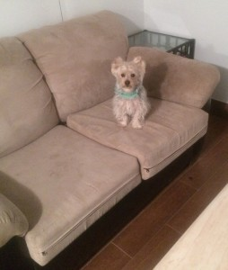 Sofa-Pet-Stain-Cleaning Coral Gables